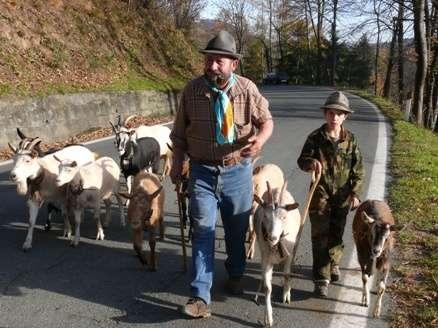 Passione per le capre storie di pascolo vagante for Cattura per capre